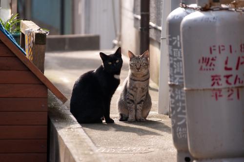 Chiba_cats